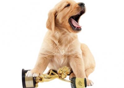 KNGF winnaar Gouden Loekie 2015