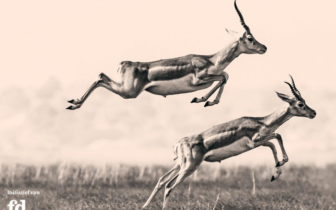 Validators sleept FD Gazelle 2020 binnen!